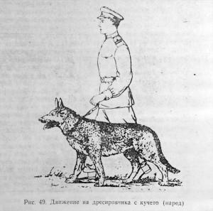 кавказка овчарка и команда редом