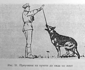 Команда Седни при Кавказка овчарка