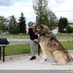 куче кавказец