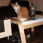Кавказка овчарка и котетата