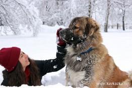 Моя кавказец Крикс и Вероника в снега