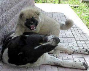 Ранна социализация на кучето