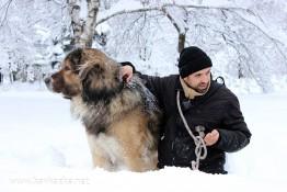 Кавказка овчарка Декстър през зимата