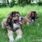 кавказци в парка